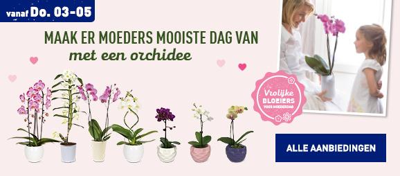 Orchideeen voor moederdag