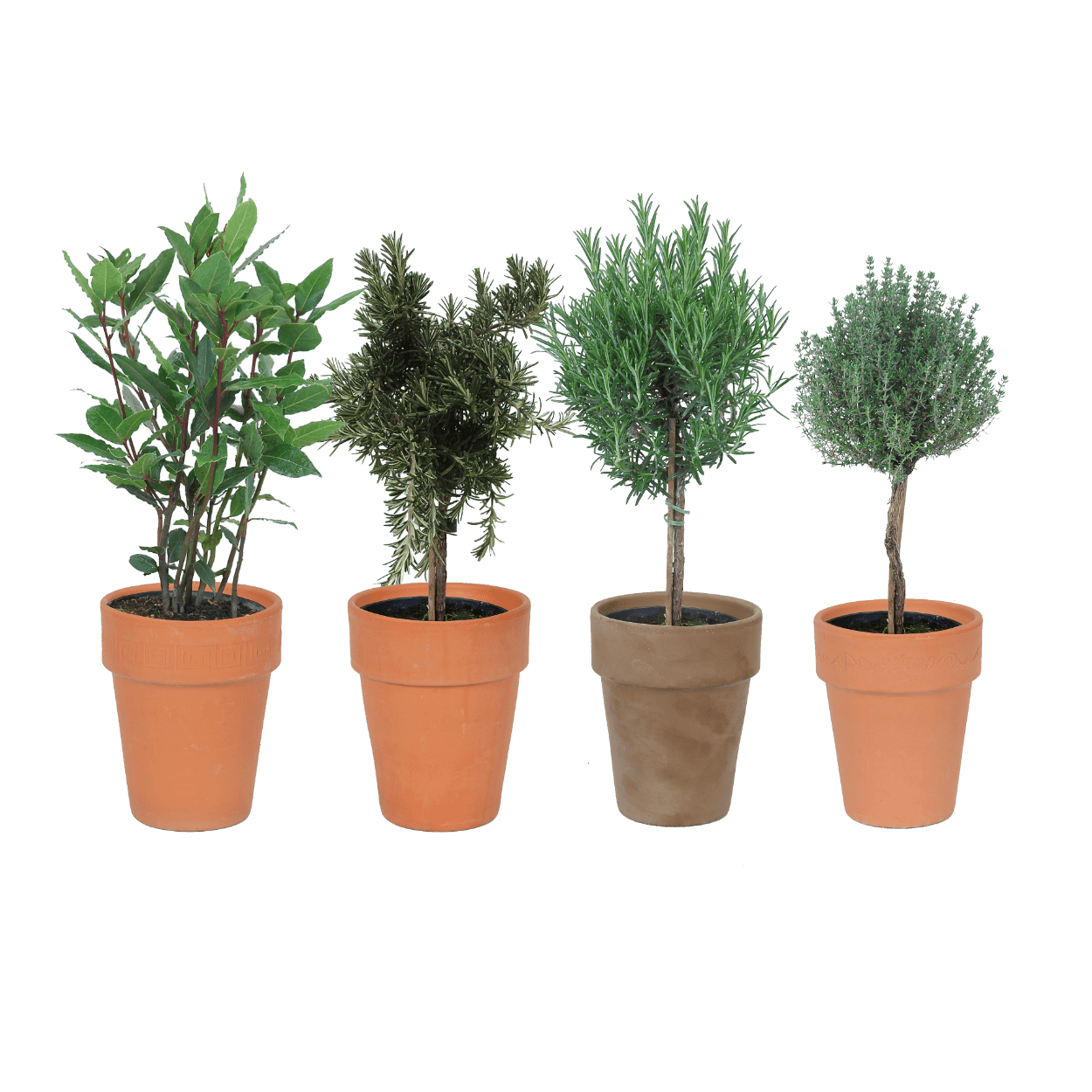 kruidenplanten van aldi