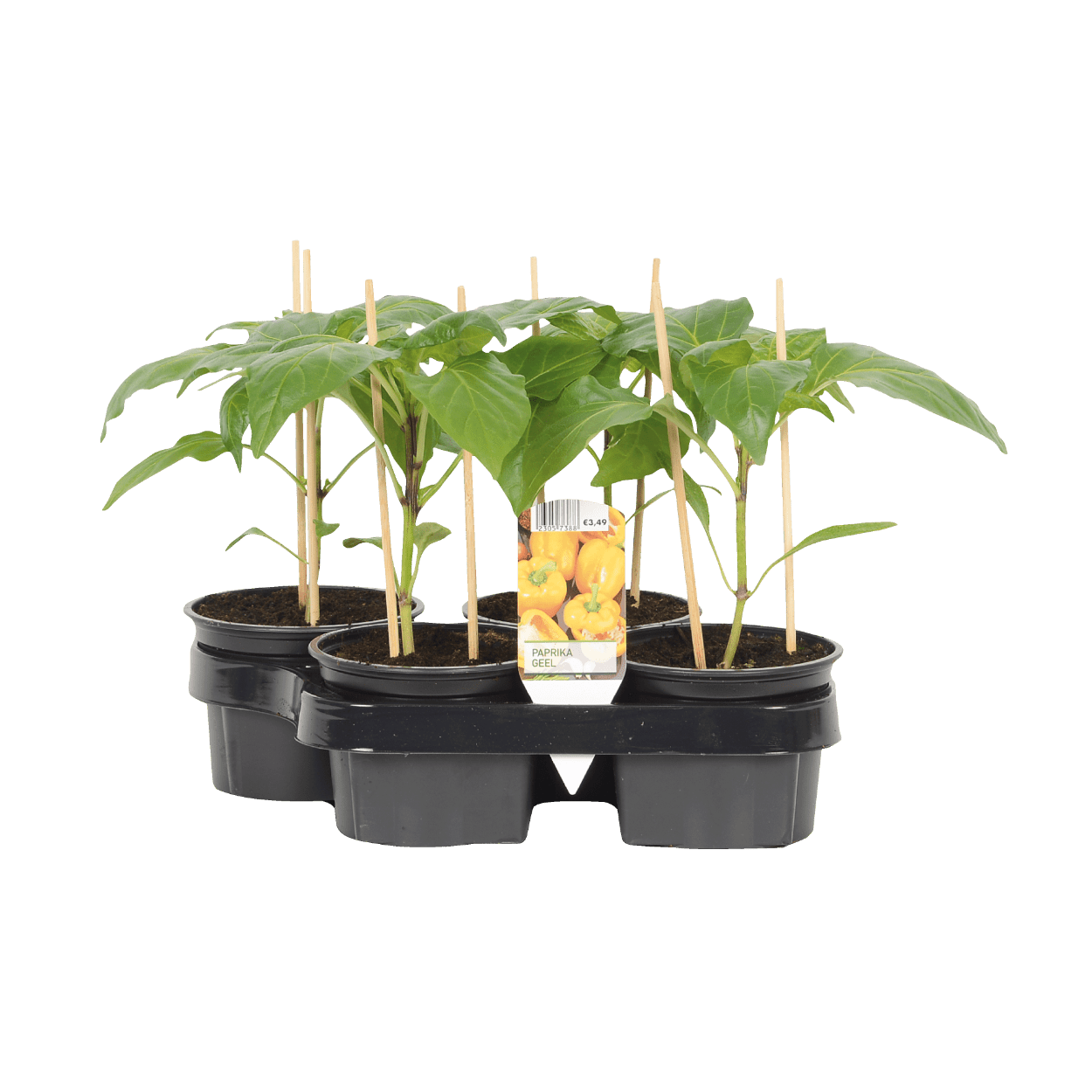 groente planten uit de aldi folder