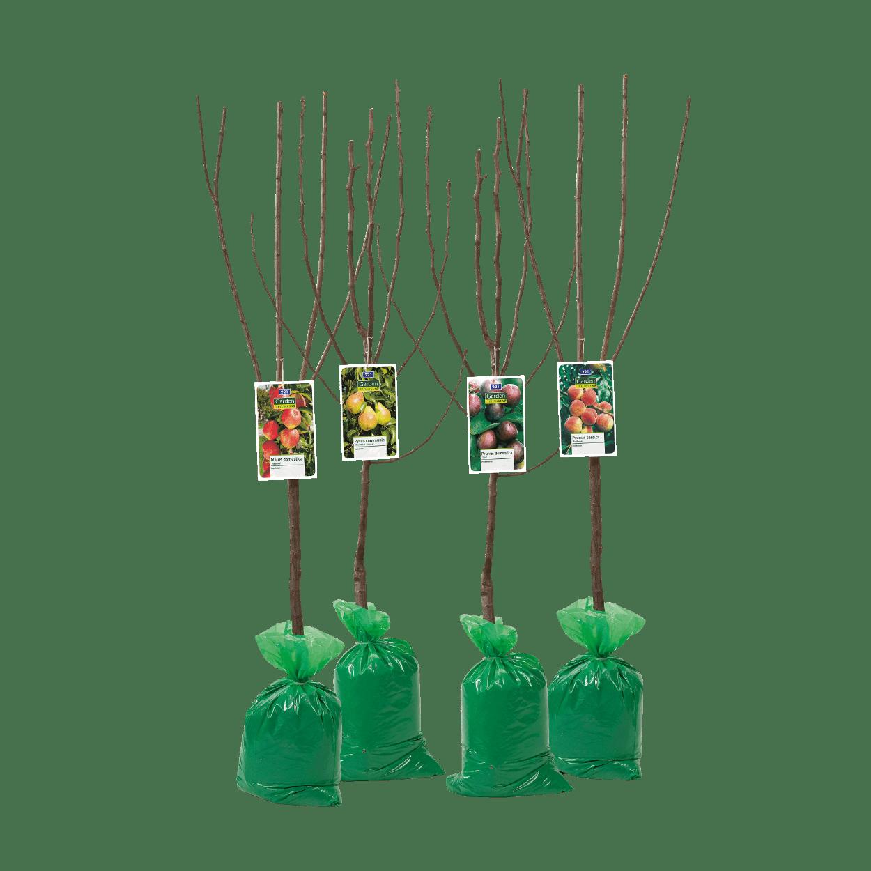 fruitboom van de aldi
